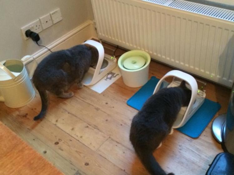 SureFeed Microchip Pet Feed Scanning Food Bowl