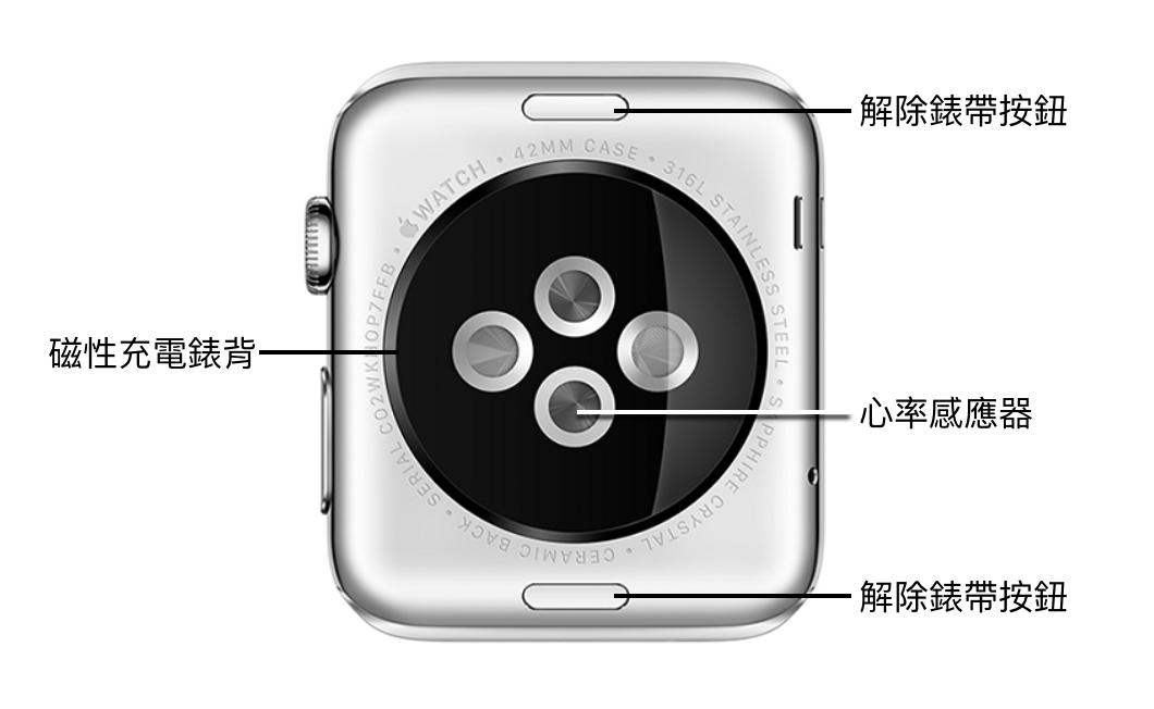 認識 Apple Watch 背面