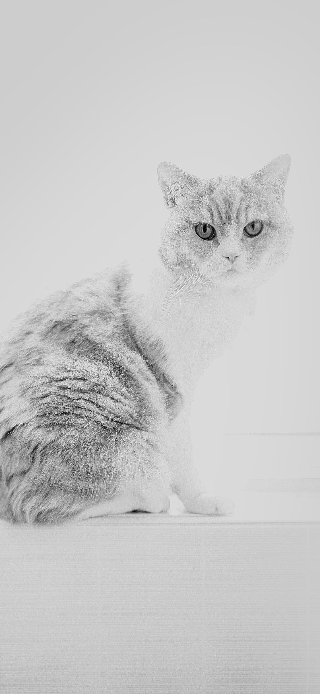 iPhone X 桌布下載、iPhone 桌布下載、貓、貓桌布