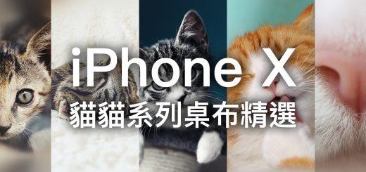 iPhone X 桌布下載、iPhone 桌布下載、貓、貓桌布 19
