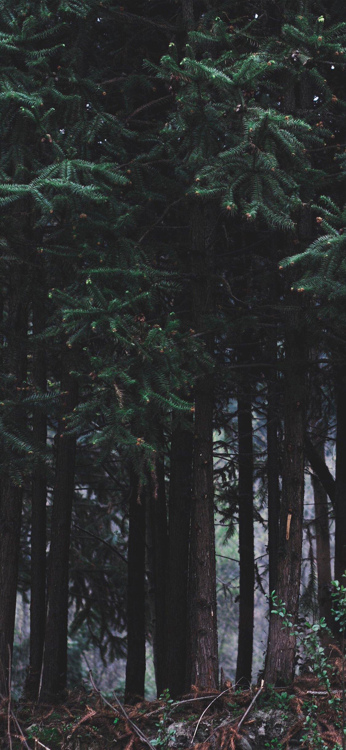 iPhone X 桌布、iPhone 桌布、森林桌布